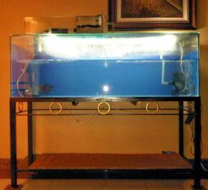 agar-kualitas-air-akuarium-terjaga